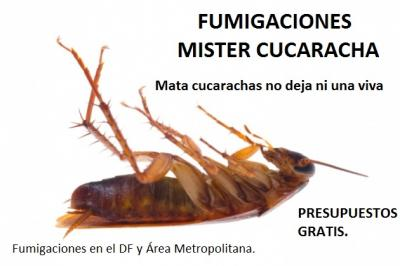 20150823220806-20150723013823-mister-cucaracha.jpg