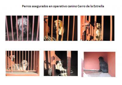 20130108045208-perros-asesinos.jpg